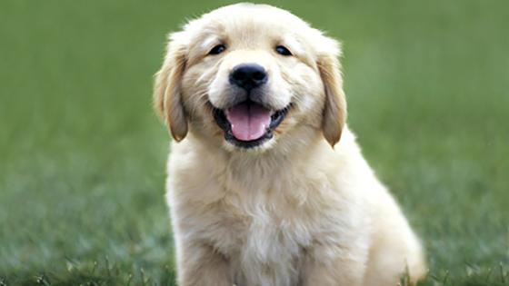 الكلب يضيف صفة جديدة إلى صفاته.. يفهم الكلمات والنبرات coobra.net