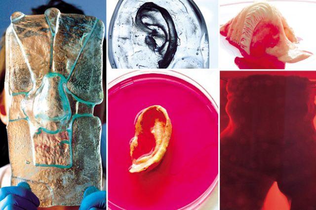 صورة توضح مراحل تصنيع الأعضاء البشرية معمليا