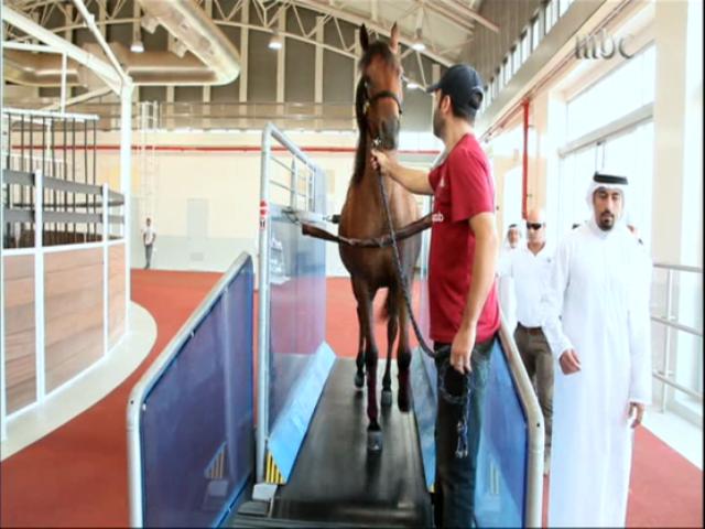 جهاز الركض لتدريب الخيول ومعالجة ظهرها