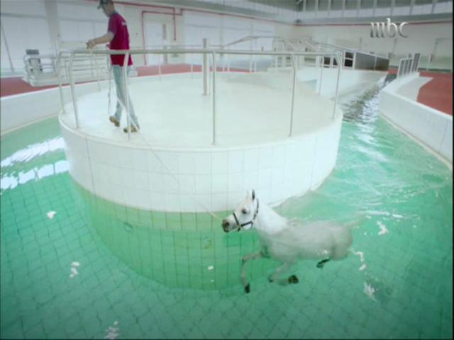 حمام سباحة لتدريب الخيول