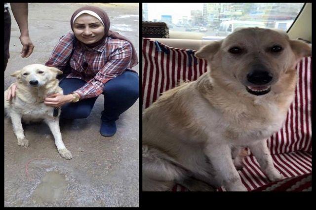 صورة الكلبة الأم مع إحدى الناشطات - فيسبوك