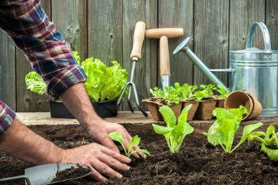 إليكم الجهاز الجديد لزراعة الخضار
