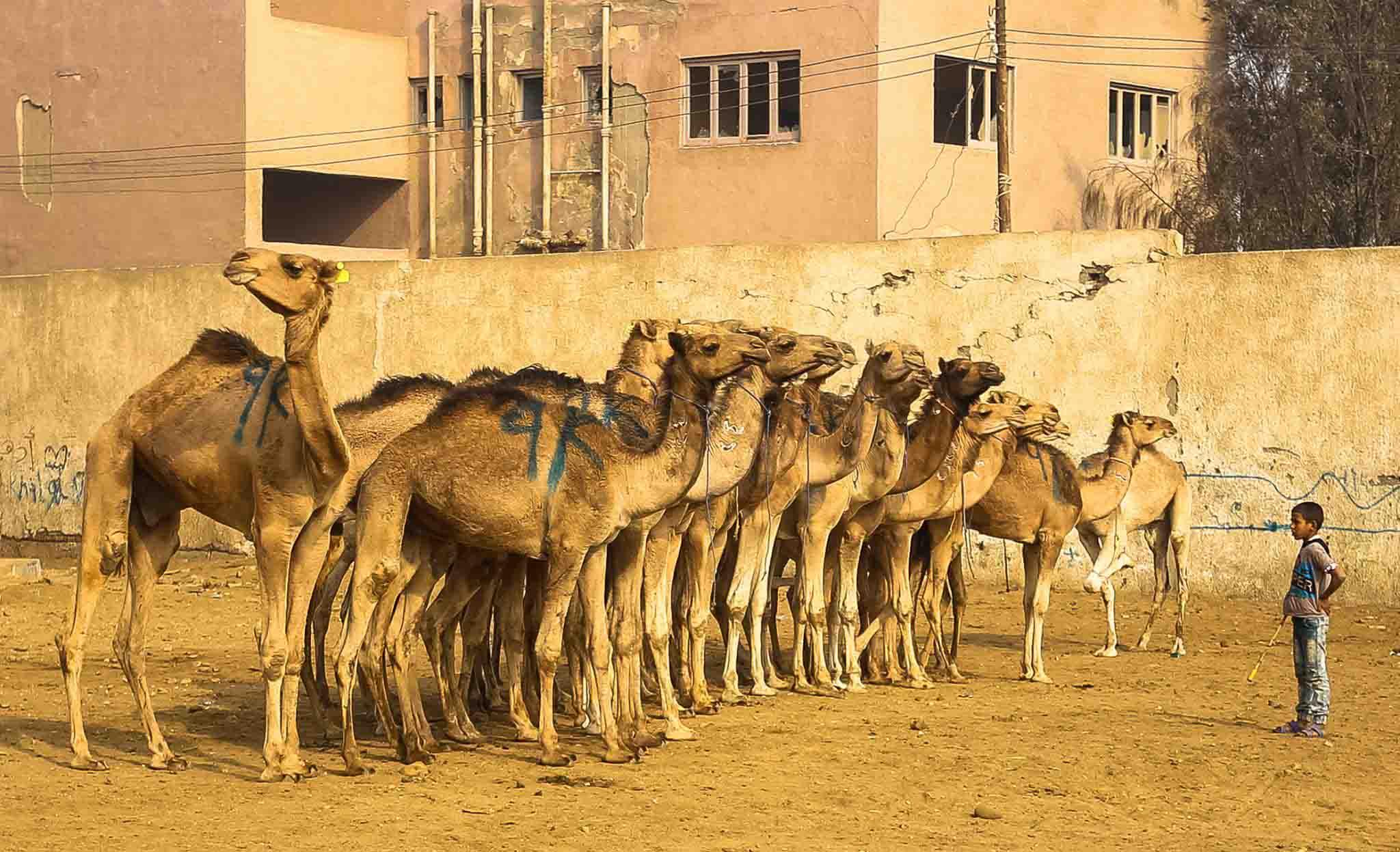 بعض أعمال المصور المصري عادل بيومي *الصورة من سوق الجمال بالقاهرة